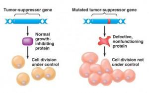 Gen Supresor Tumor